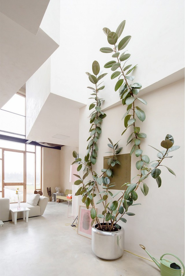 trend-alert-giant-trees-indoors-1664327-1455848149.640x0c