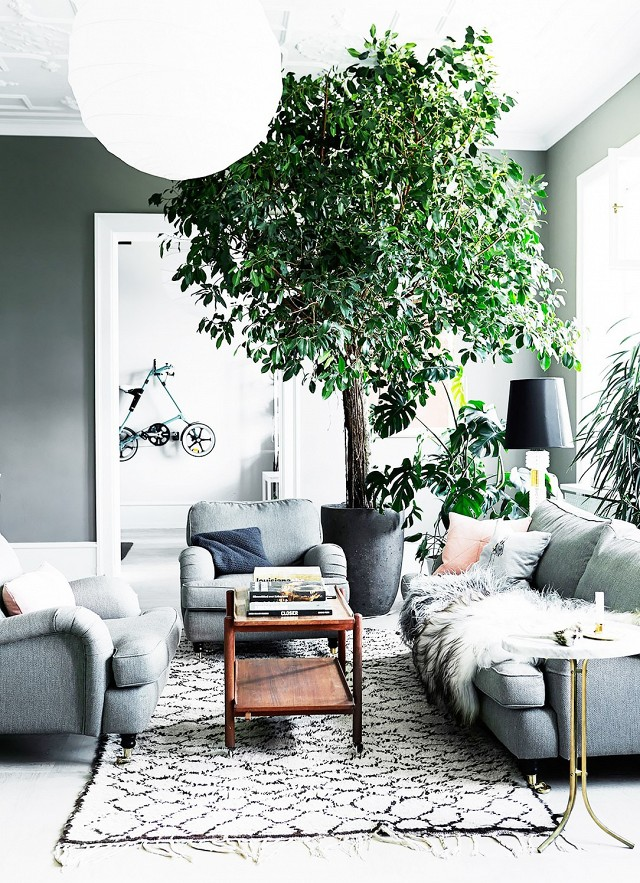 trend-alert-giant-trees-indoors-1664344-1455848410.640x0c